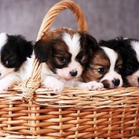 Everyone loves puppies