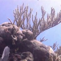 What's killing coral in the Florida Keys? Scientists say it's more than just rising temperatures
