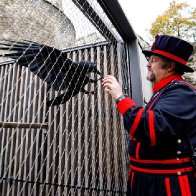 'Queen' raven leaves Tower of London — will kingdom crumble?