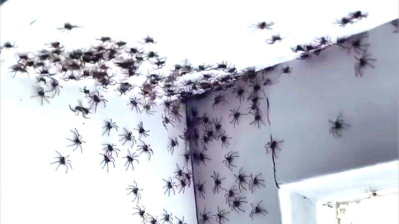 Viral Video of Spider Infestation Makes International News