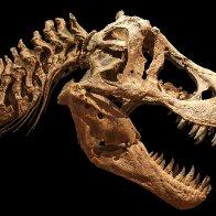 Researchers find ultimate smoking gun in dinosaur extinction