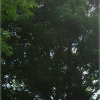 horse-tree-long-IMG_4019.jpg