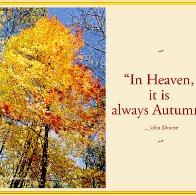NT_autumncanopy1.jpg