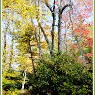NT_autumnforestint13.jpg