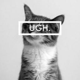 @sassycat