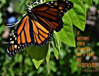 Butterfly change.jpg