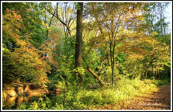 autumnwoodsfairmountparkphiladelphiapennsylvaniaagurmankin.jpg