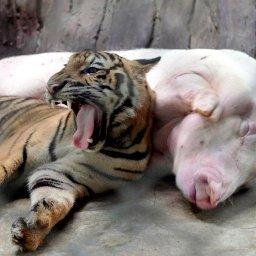 20-cutest-animal-friends-sleeping-together