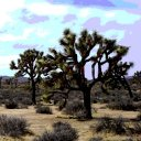 Day 7, Joshua Tree