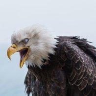 Wisdom Of The Eagle
