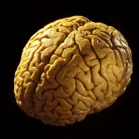 'Brain in a bucket' study spurs medical, ethical debates