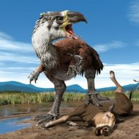 How birds may have escaped the dino-killing asteroid impact