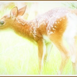 Fawn in Lifting Fog, and Others