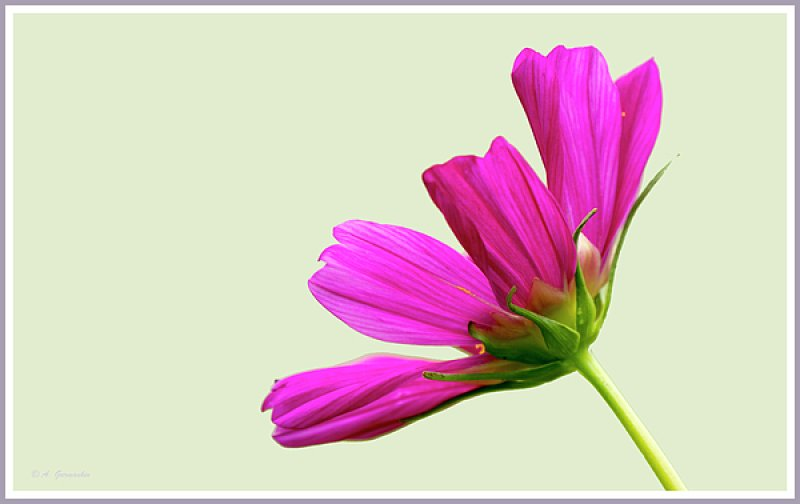 """""""The earth laughs in flowers.""""  ― Ralph Waldo Emerson"""