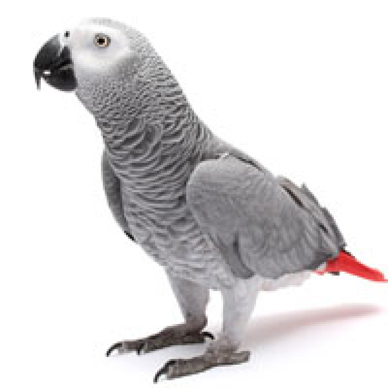 Parrots Think They're So Smart. Now They're Bartering Tokens for Food.
