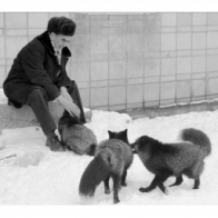 These domesticated foxes were 60 years in the making
