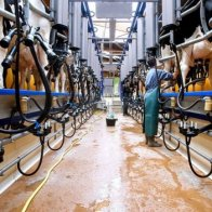 Intensive farming 'least bad option' for food and environment