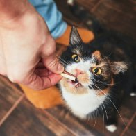 13 Things You Do That Your Cat Actually Hates