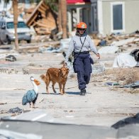 With Sniffer Dogs and Hope, Rescue Teams Comb Through Hurricane Michael Damage