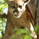 Trail runner who choked Colorado cougar to death 'used hands, feet,' wildlife official tells TV station