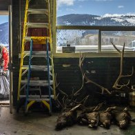 Hunters say it's not a 'zombie disease,' but they are worried about deer illness
