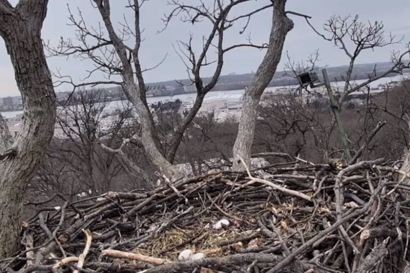 More Eagle Cam Drama: Liberty abandons eggs, takes up with yet another male suitor