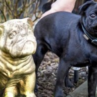 In Germany, Family Pug Seized And Sold On EBay To Cover Unpaid Debts