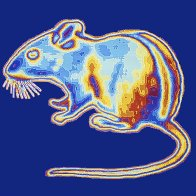 Scientists create super-mice that can see in the dark. Here's what that means for humans.