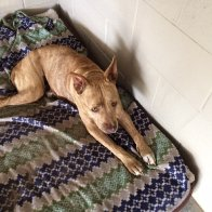 Hi, I'm Reba - You need to hear my story. UPDATE, MONDAY MARCH 18TH