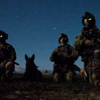 K-9 Veterans Day, March 13th...The Dogs of War.