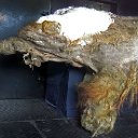 Cells from a 28,000-year-old woolly mammoth have been 'revived'