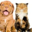 Dog owners are much happier than cat owners, survey finds
