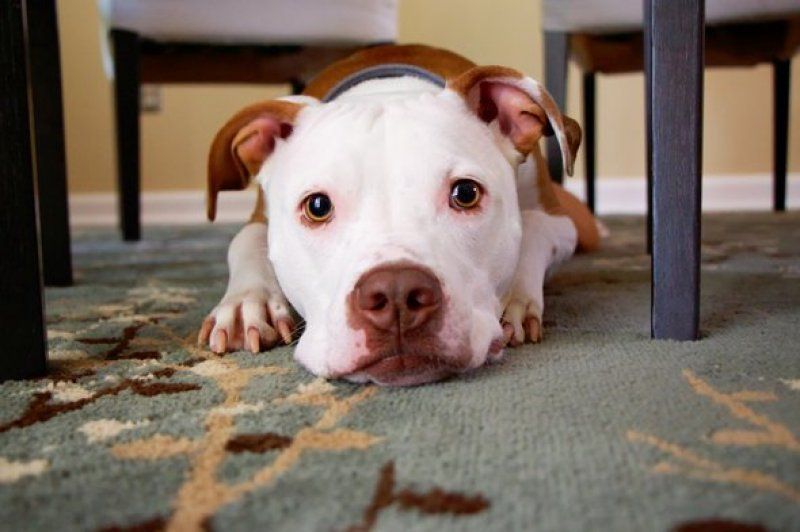 Things to Know on Dog Farting Awareness Day - Today April 8th