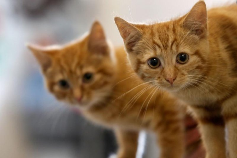 Australia is trying to kill its cat population by dropping poisonous sausages from planes