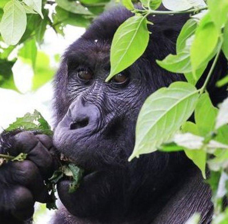 One Million Species at Risk of Extinction, Threatening Human Communities Around the World, U.N. Report Warns