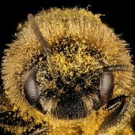 "20 photos of bees that will make you say, ""Damn, bees are beautiful"""