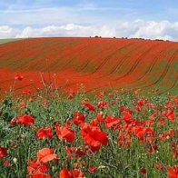 Memorial Day - In Flanders Fields