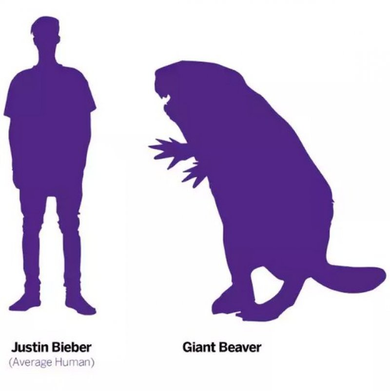 Why giant human-sized beavers died out 10,000 years ago