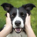 Dogs owners feeling long-term stress can transfer it to their dogs, science shows