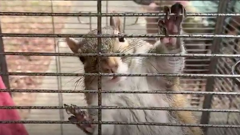 Alabama man allegedly fed 'attack squirrel' meth to keep it aggressive: officials