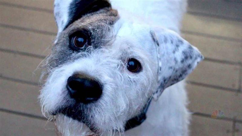 The evolution of 'puppy dog eyes'