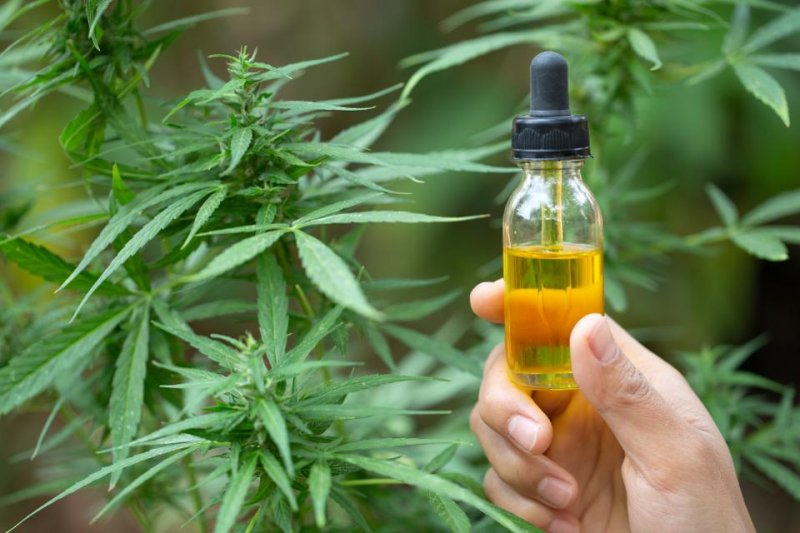 Marijuana Study Finds CBD Can Cause Liver Damage