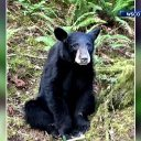 Black bear killed for getting too friendly with humans