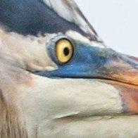 The 2019 Audubon Photography Awards Winners