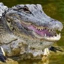 Meth-gators aren't real, Tennessee police department says after viral Facebook post