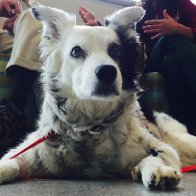 Chaser, the 'world's smartest dog,' dies at 15