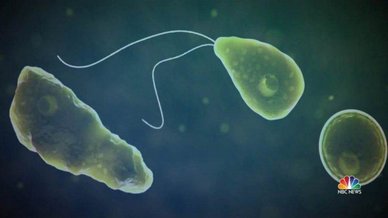 Brain-eating amoeba kills man who swam at water park