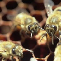 Miners, keepers: Could bees be the answer to West Virginia's coal slump?