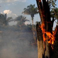 What you can do to help the burning Amazon rainforest