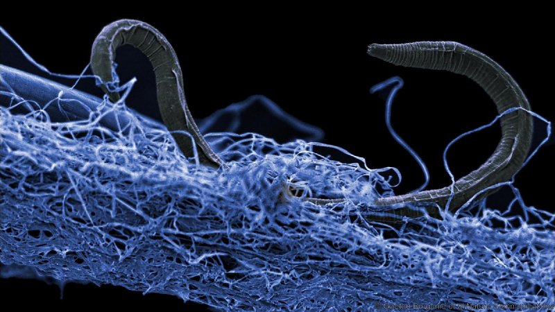 Strange life-forms found deep in a mine point to vast 'underground Galapagos'